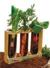Sprout and Grow Window Kit