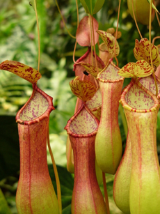 Carnivorous Plants site has articles on plant care, types of carnivorous plants, and sources to buy them.